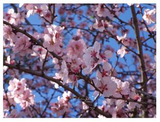flori de piersic2 by HikarinoChou