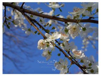flori de zarzar by HikarinoChou