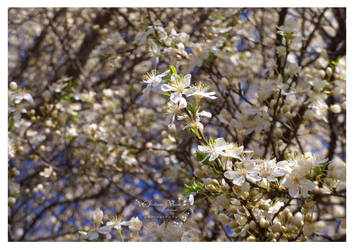 flori de zarzar 2 by HikarinoChou