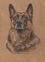 German shepherd Rex by 50dd
