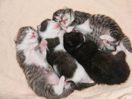 Kittens by Plug-Fox