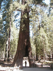 Yosemite-Ahwahnee 2005 - 5of6 by jmanx