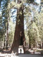 Yosemite-Ahwahnee 2005 - 5of6 by jmanx