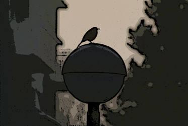 blackbird by Bildermacher