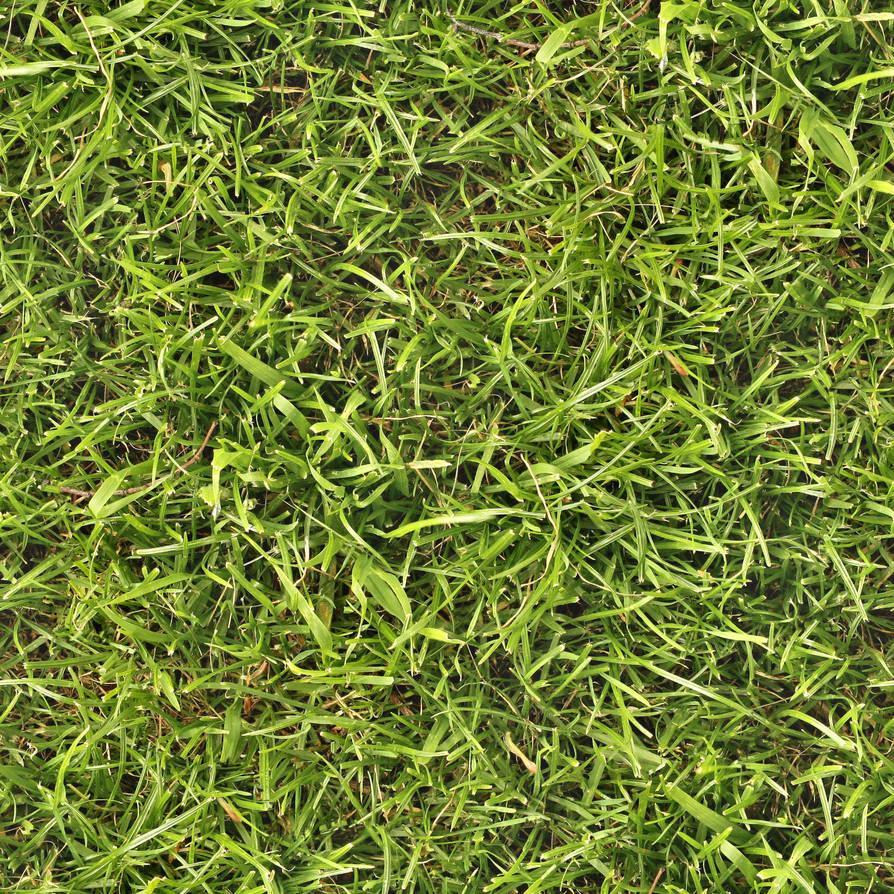 Seamless grass texture by hhh316