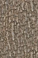 Seamless tree bark OMG by hhh316