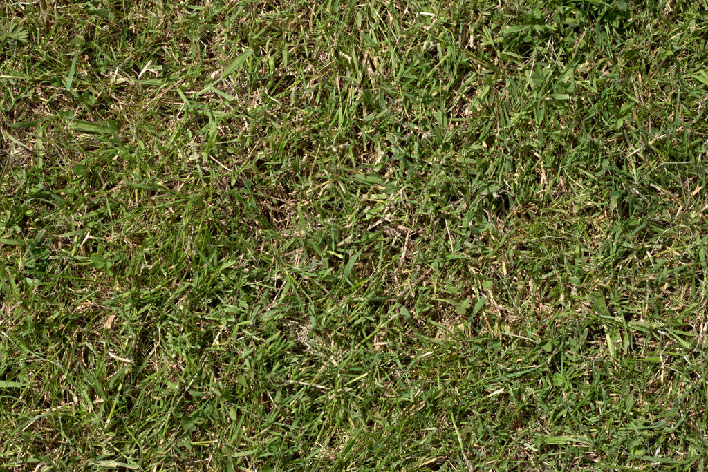 Grass turf lawn green ground field texture by hhh316