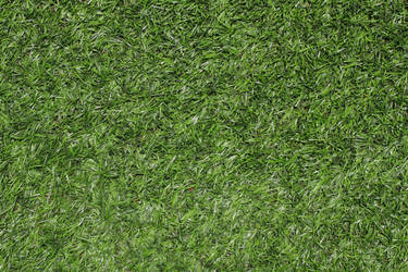 Grass Green Plastic Texture 3888 X 2592 by hhh316