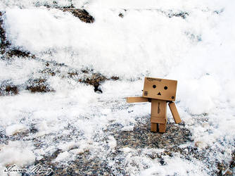 Day 001: My name's Danbo by twong314