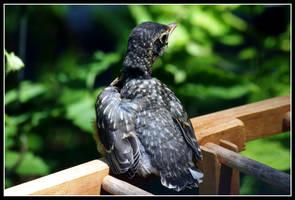 Baby Birdy by MissNioniel