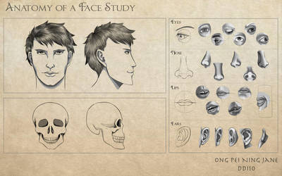 Anatomy of a Face Study by janegreentea