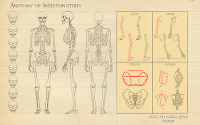 Anatomy of a Skeleton Study by janegreentea
