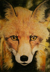 Fox Close-Up-Portrait by Individumm