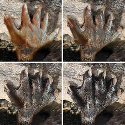 Otter Paw Morph by oboroten