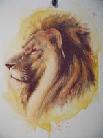 Colored pencil lion by paper-Panda