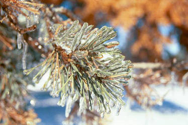 Frozen Green by nikonraccoon