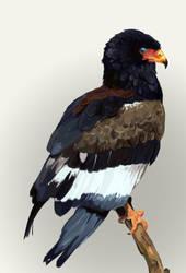 Bird by Ekki
