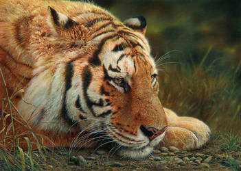 Beauty at Rest by denismayerjr