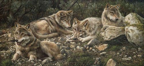 Forever Wild by denismayerjr