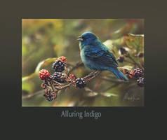 Alluring Indigo by denismayerjr