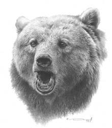 Grizzly Bear Study by denismayerjr