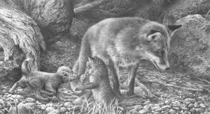 Red Fox Study by denismayerjr