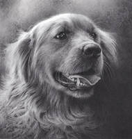 Dog Drawing- Low Res  by denismayerjr