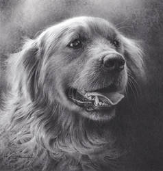 Dog Drawing- Low Res  by denismayerjr