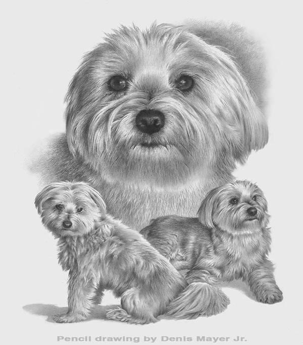 Pet portrait. by denismayerjr