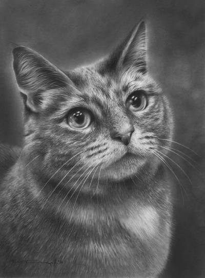 Cat Portrait by denismayerjr
