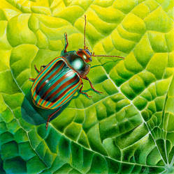 Bob the bug by Heliocyan