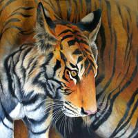 Little tiger by Heliocyan