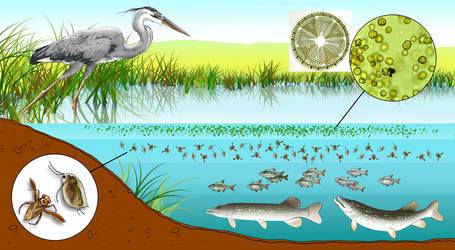 Pond life by Heliocyan