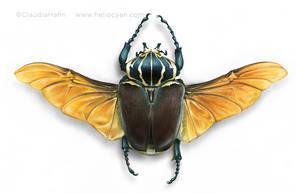 Goliathus Beetle by Heliocyan