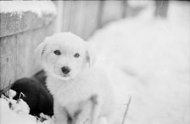 white doggy by mihneasim
