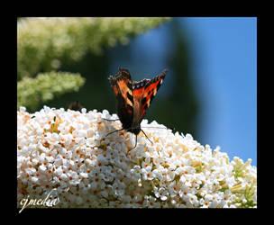 Sweet Nectar by Illucifer