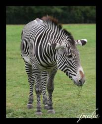 When Eeyore wore Stripes by Illucifer
