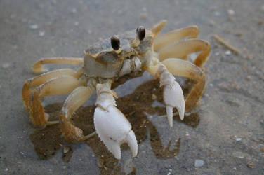 A Crab by magdalansaiyantoa