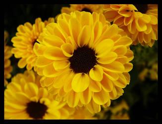 Flowers. by spacedude89