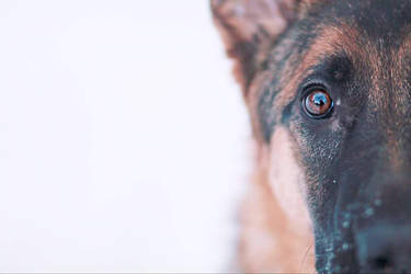 My third dog Iisa by Greisikoira