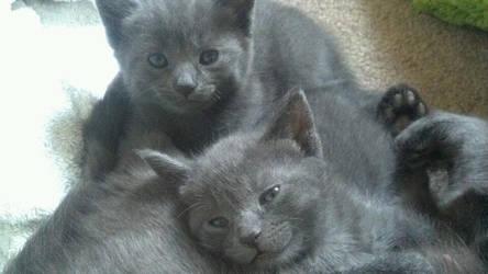 Le Kittens by Wazwazwaz