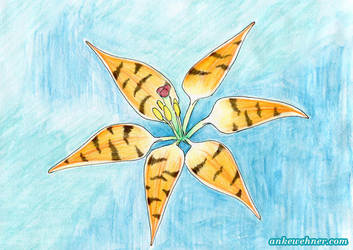 Tiger Lily by ankewehner