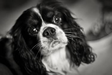 Doggie by TriwioMegram