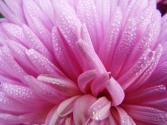 Morning Dew by happybg