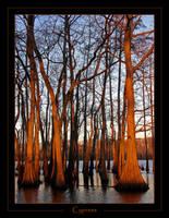Cypress by ScottAlbert