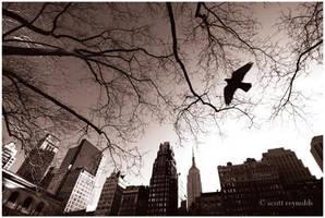 new york by serphoto