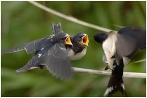 feeding time by nakitez
