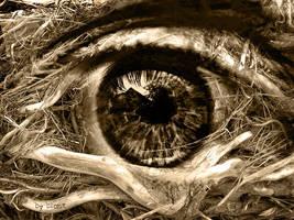 the eye by Pesimisth