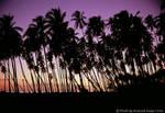 'Royal Palms'....... by TribblePom55