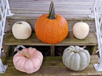 'Pumpkins in Technicolor'.... by TribblePom55